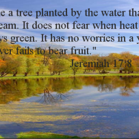 Tree Planted By Water